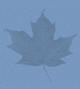 Maple leaf image